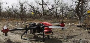 Drone pollination solves the problem of pear farmers
