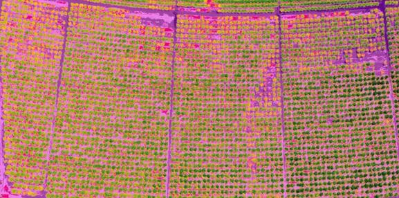 Big New! Scientists Have Made Progresses in Using Drones in Detecting Tree Disease